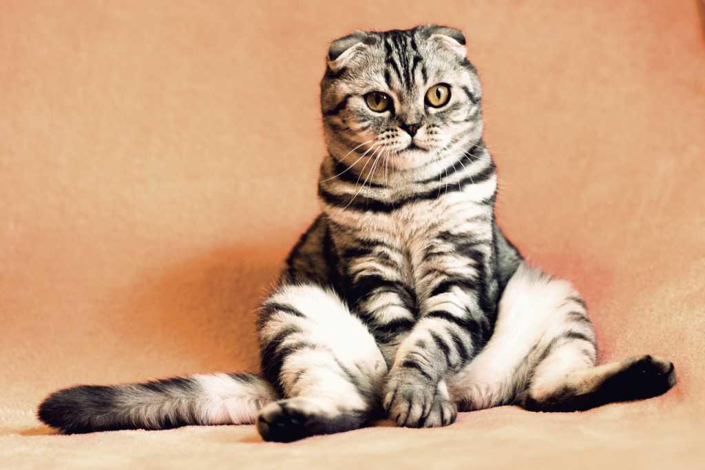 В Китае стартуют массовые продажи клонированных котов