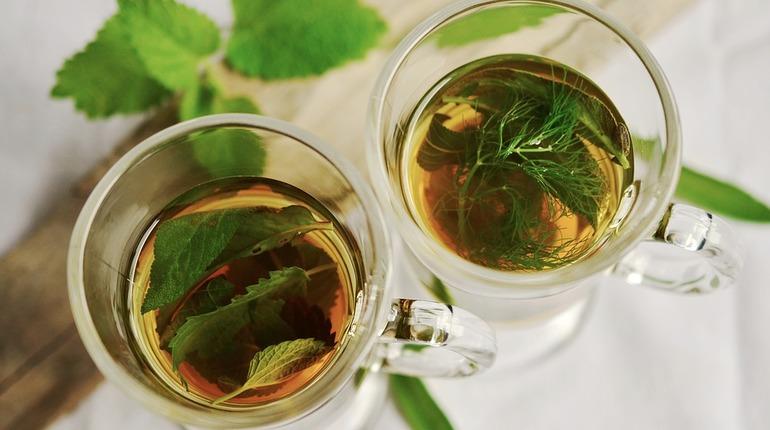 Любовь к зеленому чаю может продлить жизнь