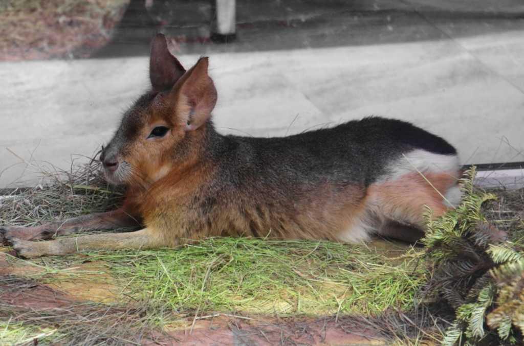 Ленинградский зоопарк меняет график работы, кассы будут закрывать раньше