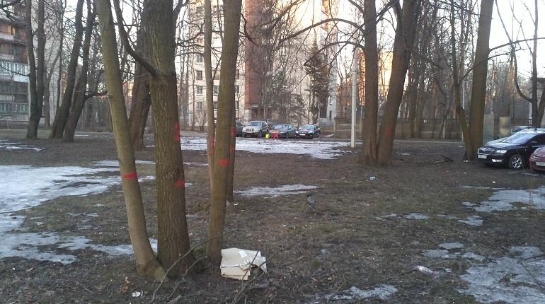 Деревья на 2 Муринском проспекте. Фото: соцсети