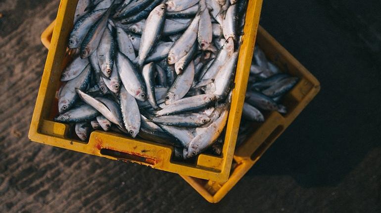 Учёные создали экопластик из рыбных отходов