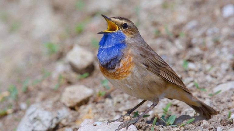 В Ленобласти фотограф снял редкую птицу