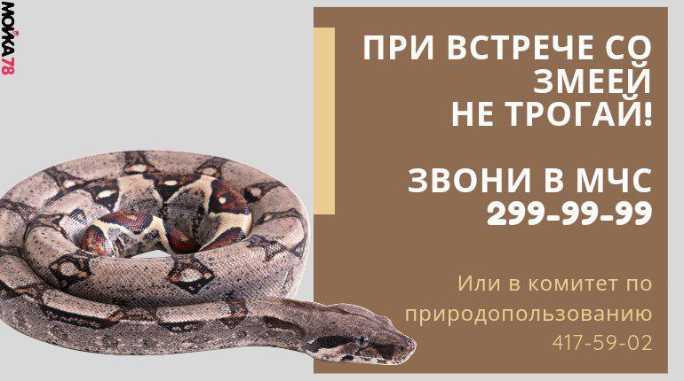 Змеи Петербурга интересуются новым парком