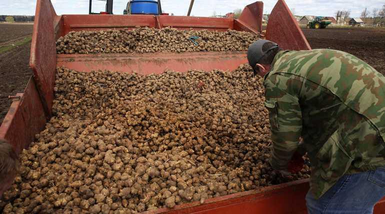 Петербургские фермеры «прячутся» от супермаркетов