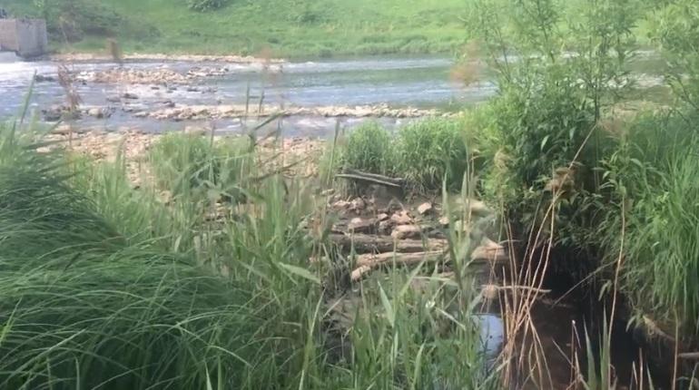 Росприроднадзор проверил Ижору после сообщения о сбросе стоков в реку