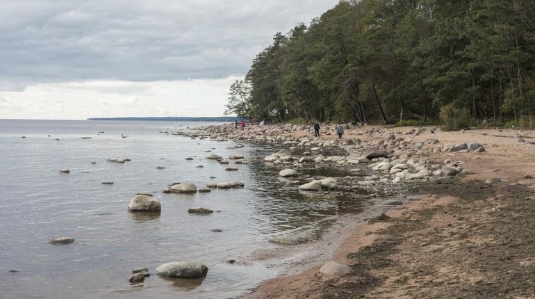 «Казалось, что его легкие выгорели»: молния убила мальчика в грозу на Финском заливе из-за зонта