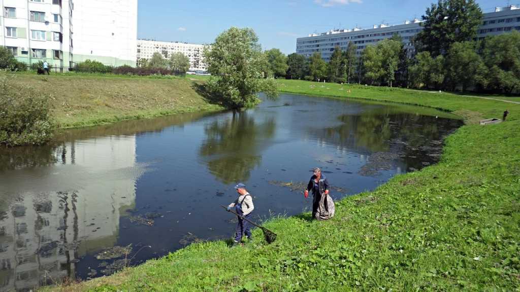 В Петербурге пройдет онлайн-праздник, посвященный Дню эколога