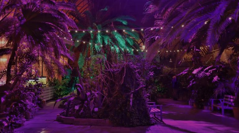 В оранжерее Таврического сада откроется фотовыставка об одиночестве