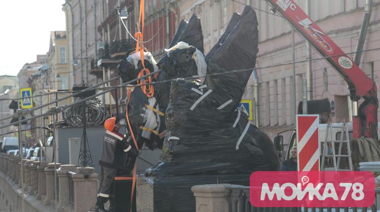 На Банковский мост привезли грифонов: фоторепортаж «Мойки78»