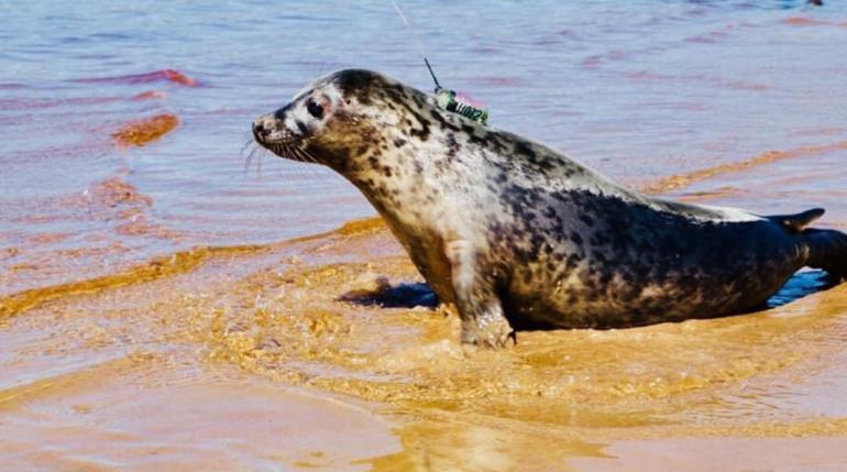 Выпуск тюлений в Финский залив. Фото: группа