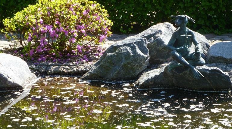 В Петербургском ботаническом саду расцвела сакура свекольного цвета