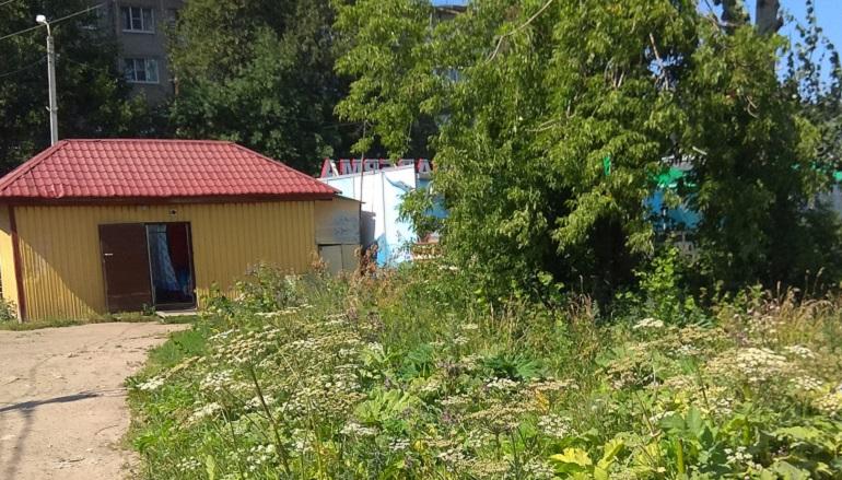 Борщевик атаковал Ленобласть. Фото: активисты Бугров