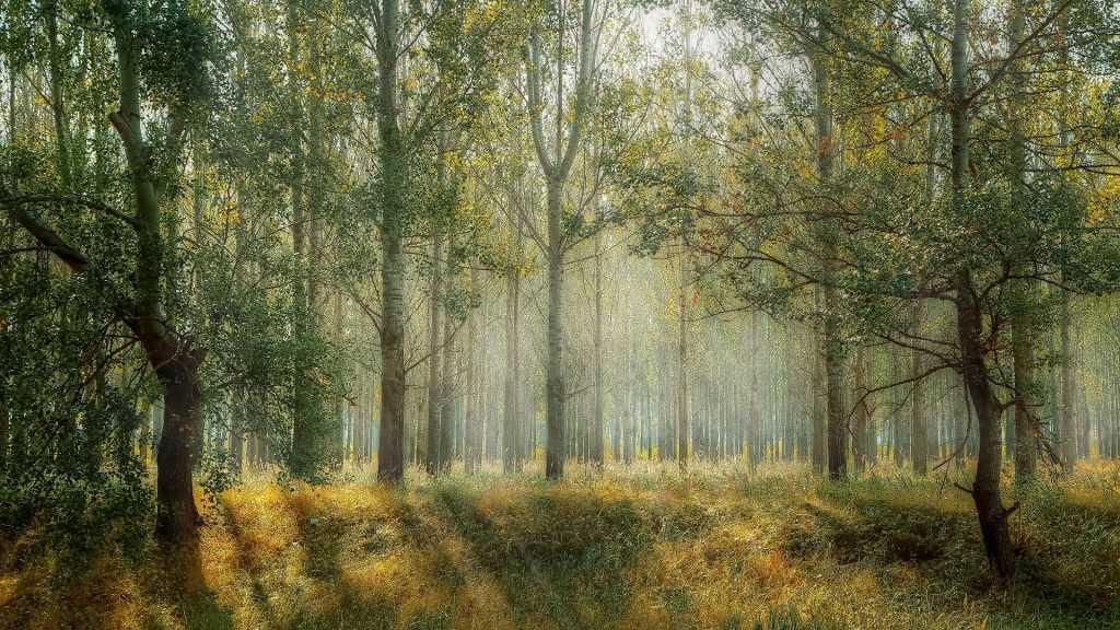 Чиновников Росимущества подозревают в причастности к хищениям леса