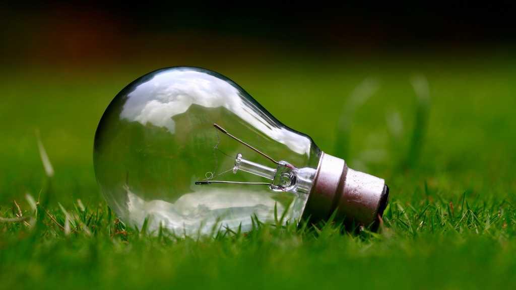 В Ленобласти выбирали лучший экологический бизнес-проект. Фото: Pixabay