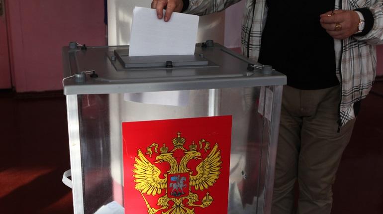 В Петербурге расскажут о наборе наблюдателей на выборы