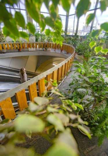 В метро Петербурга рассказали о станции с зимним садом