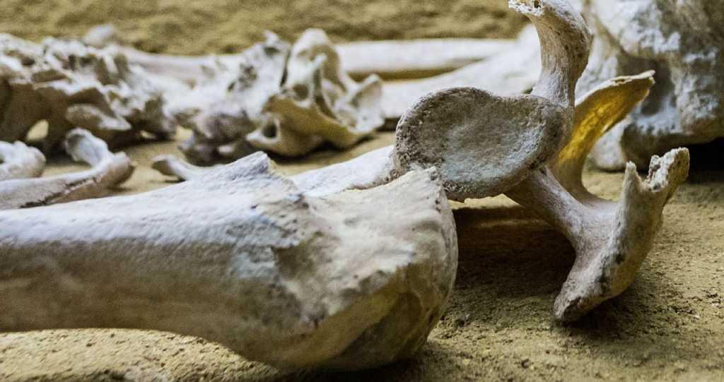 Ученые нашли следы Юстиниановой чумы в Европе