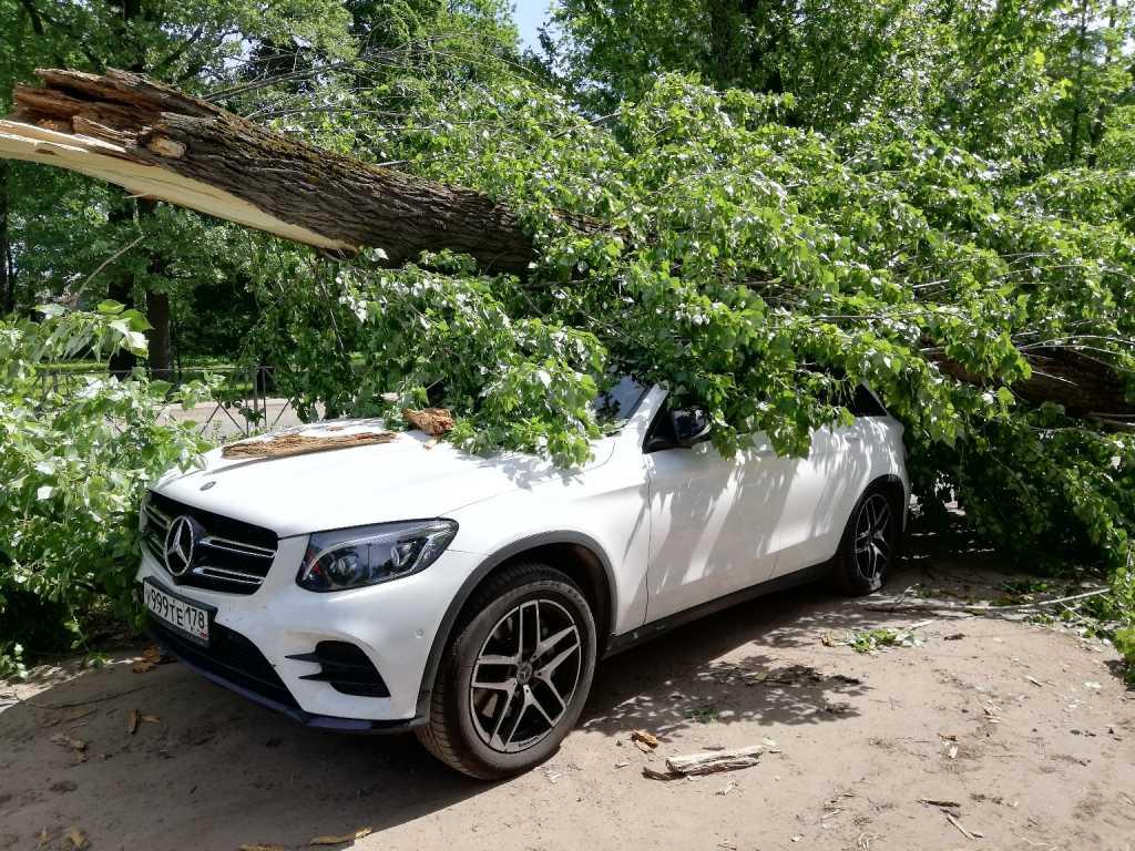Полусгнивший тополь повредил машину в Коломягах
