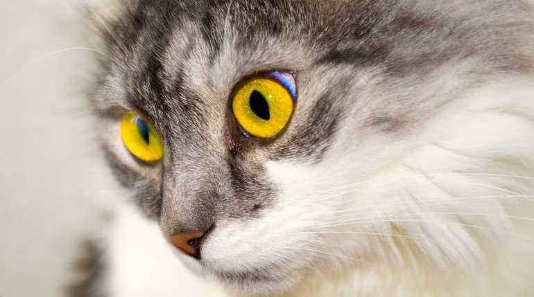 Петербургские ученые нашли коронавирус у кота, он заразился от хозяев