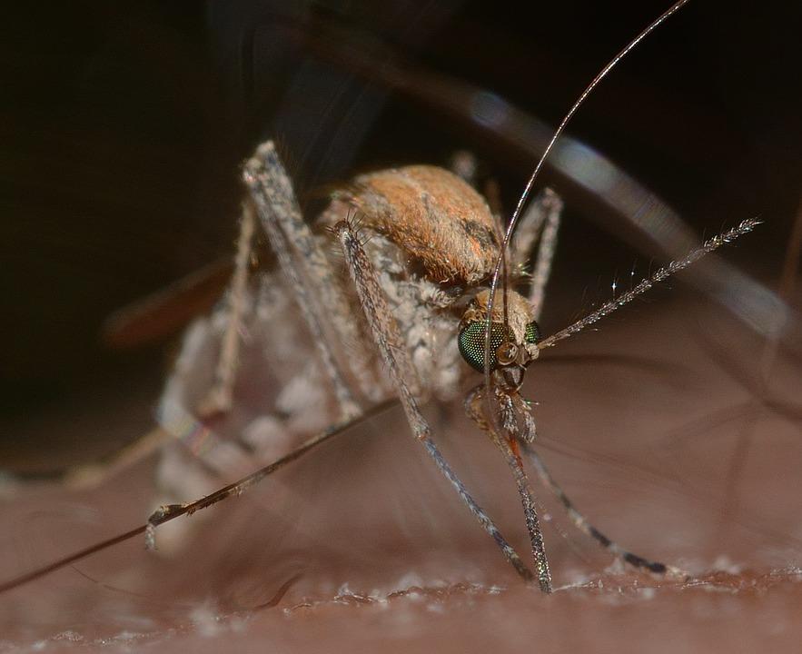 Американские ученые разработали ткань, устойчивую к укусам комаров