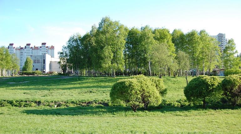 Муринский парк. Фото: Википедия: