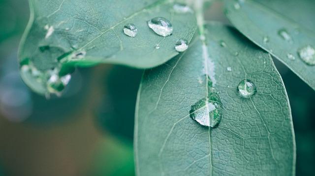Дождь. Фото: pixabay.com