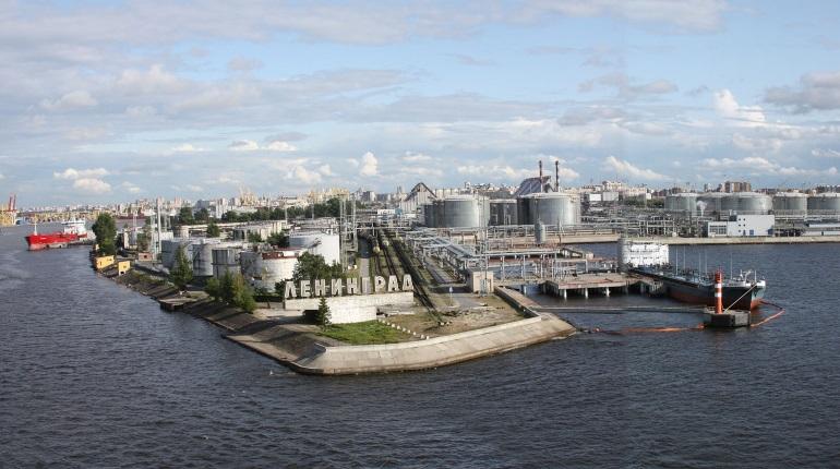 В порту Петербурга нашли почти полтонны наркотиков на 4,5 млрд рублей