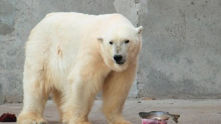 Ленинградский зоопарк показал фото всех 16 медвежат Услады
