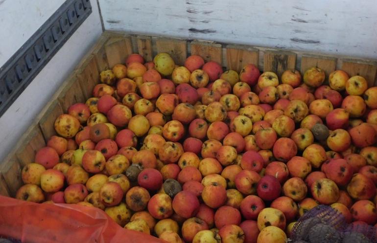 Найденный на границе в Белоруссией ящик с яблоками. Фото: Россельхознадзор