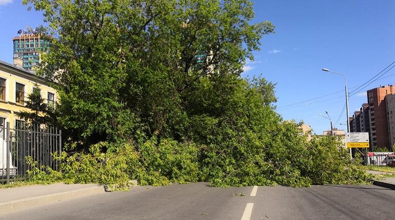 Рыбацкий проспект перекрыло упавшее на автомобиль дерево