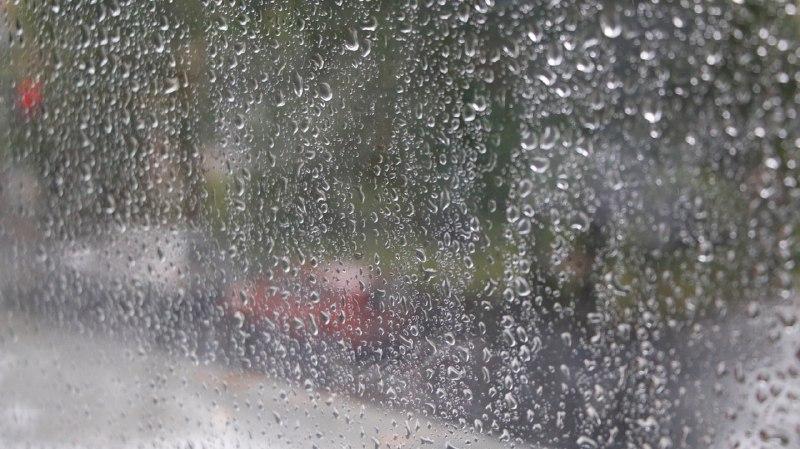 «Желтый» уровень погодной опасности в Ленобласти продержится до 2 июля