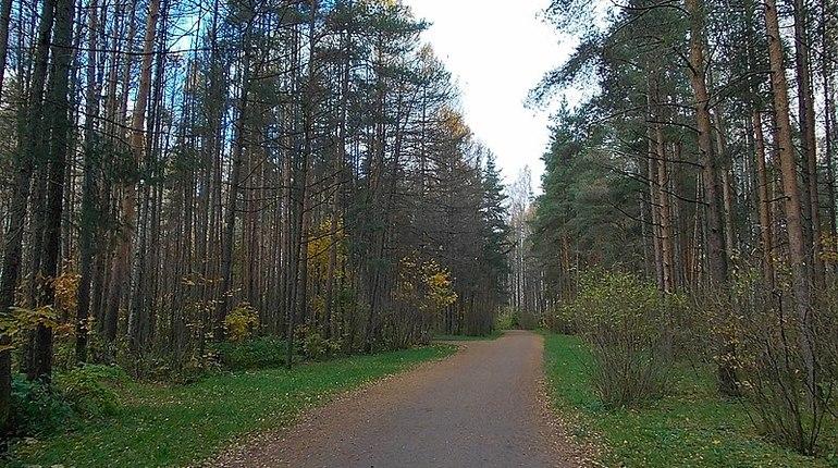 В парке Сосновка до конца октября появится наружное освещение