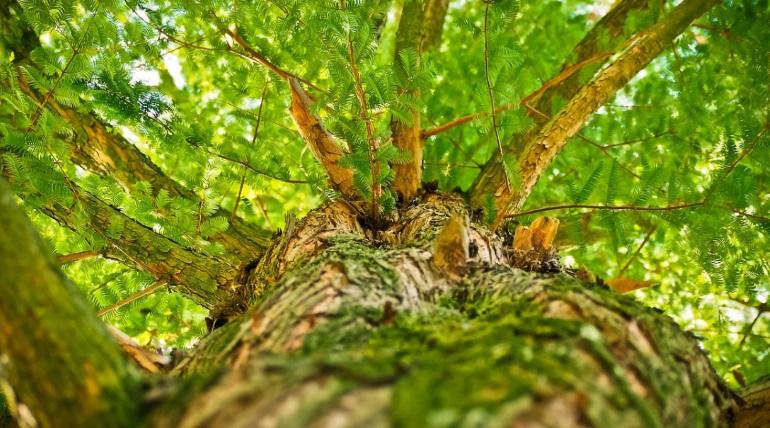 В лесу Ленобласти нашли труп со связанными руками и порезанным горлом
