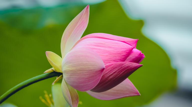 Чтобы посмотреть на тюльпаны в Ботаническом саду, придётся отстоять огромную очередь