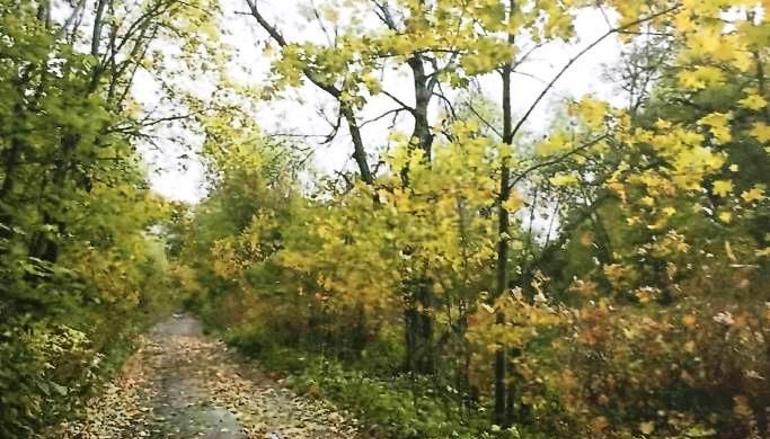 Сад дачи композитора Рубинштейна стал региональным памятником