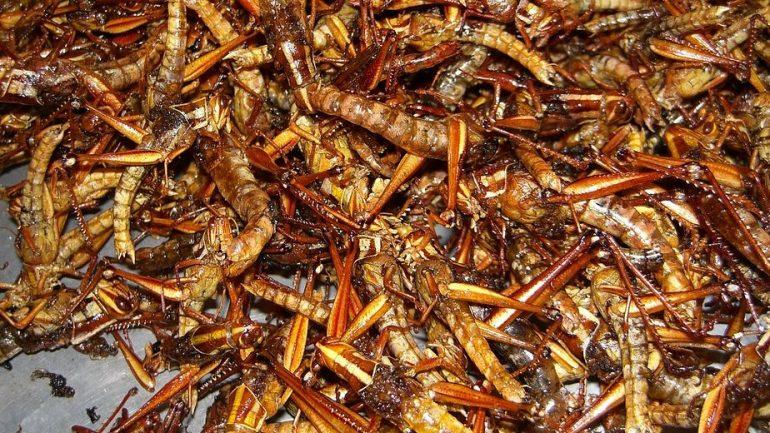 Ученые заявили, что насекомых полезно есть