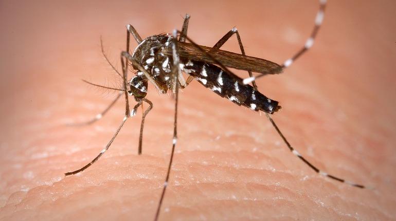Инфекции и просвещение населения: в России отмечают день комара