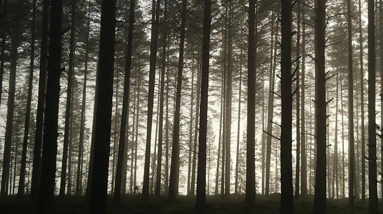Сотрудник СПбГУ нашел чужие ноги в лесу у станции Лемболово