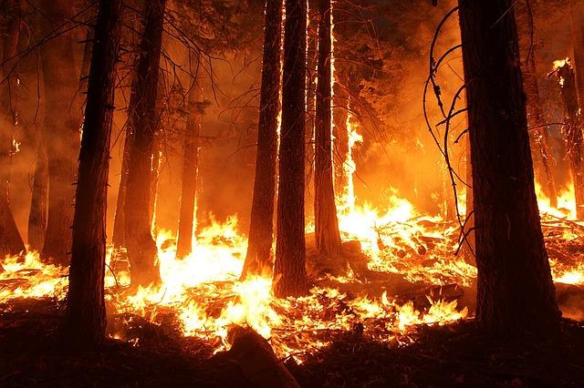 В Забайкальском крае горит более 700 гектаров тайги