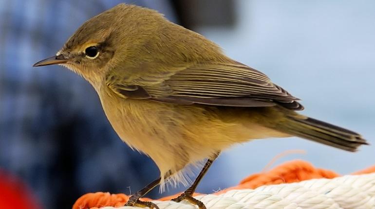 Жизнь близ аэропортов оглушила и озлобила птиц