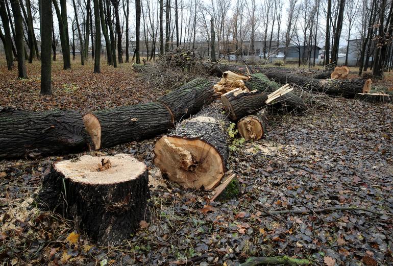 В Минприроды допустили запрет России на экспорт леса в Китай