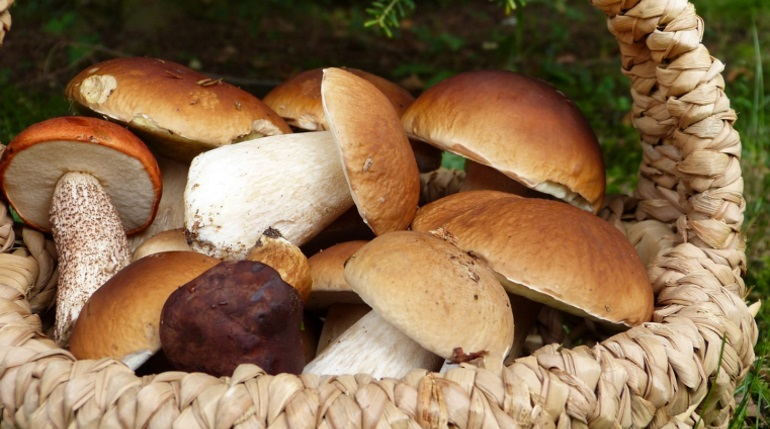 В Ленобласти женщина пошла за грибами и нашла скелет в полиэтилене