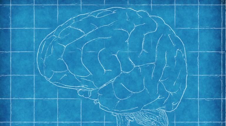 Исследователи обнаружили интересную особенность в хранении мозгом информации