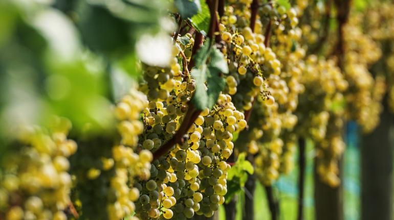 В Крыму выставили на продажу акции крупнейший винзавод