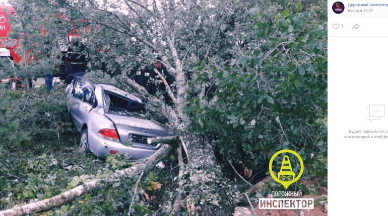 Водитель погиб, врезавшись в дерево в Выборгском районе Ленобласти