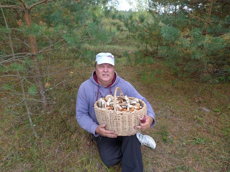 Инструкция «Мойки78»: как не заблудиться в лесу, отправляясь за грибами