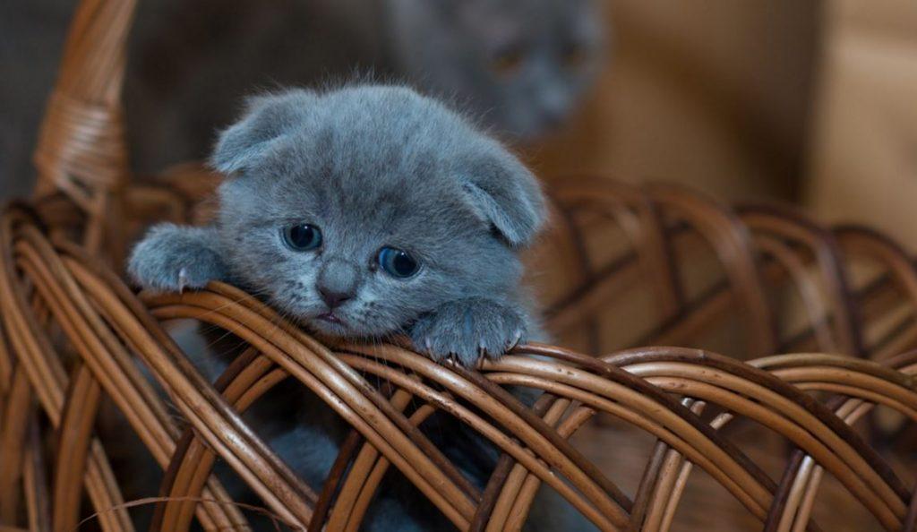 В Китае начали клонировать домашних котят