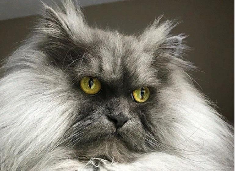 Вечно злой кот набирает популярность в Instagram