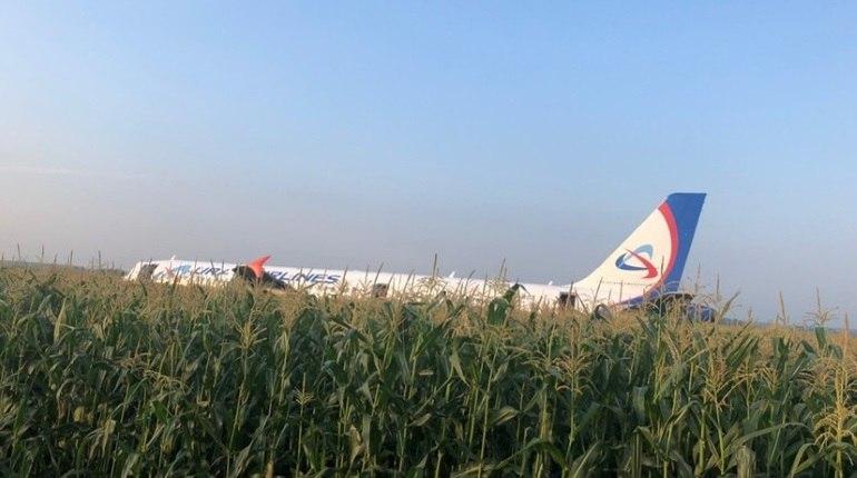 Следователи СК допросили пассажиров севшего в поле A321 «Уральских авиалиний»