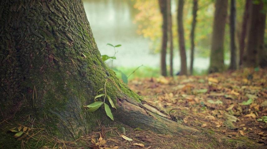 Деревья стали расти быстрее, но это плохой показатель